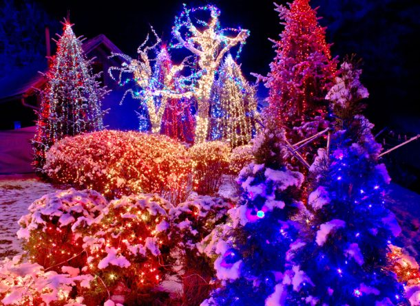 Christmas lights in the park night view